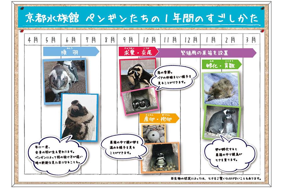 2階のペンギンエリアには、ペンギンの1年間の過ごし方を飼育スタッフの目線で解説したパネルを展示