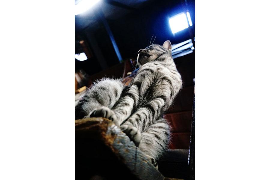 「MKタクシー」公式ツイッターの「#MK猫写真」