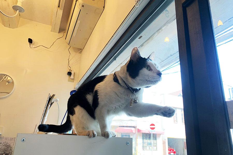 店長は「ネコ」、兵庫・姫路でウワサの無人古本書店