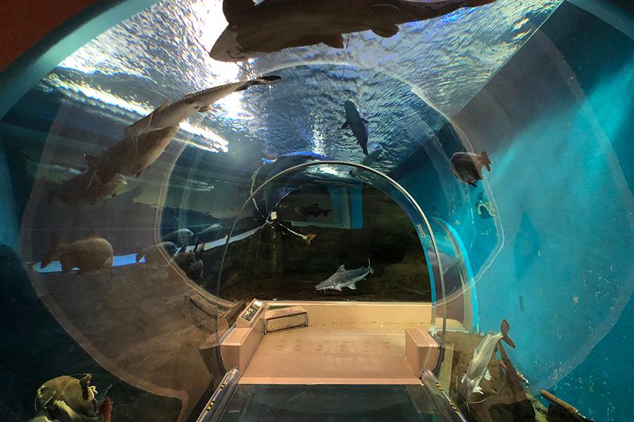 迫力あるチューブ型トンネルがあるアマゾン館。写真提供:神戸市