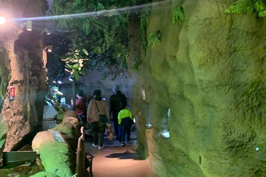 独特の雰囲気が楽しい「アマゾン館」