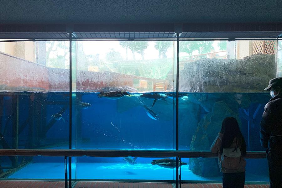 水中で泳ぐ姿を見ることもできる「ペンギン館」