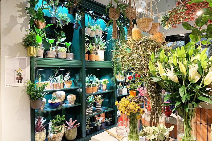 グリーンコーナーの照明には植物育成ライト、アマテラスLEDを使用し、ベストな状態をキープ