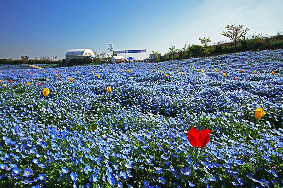 季節の花とネモフィラのコラボゾーン※写真はイメージ