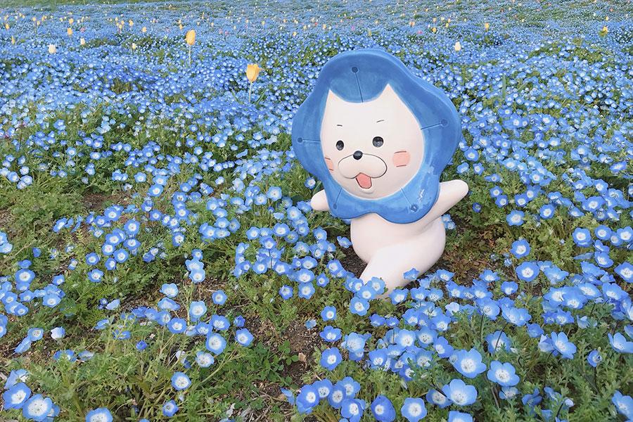 ネモフィラ畑に隠れている、イベント公式キャラクターの妖精「ネモにゃん」