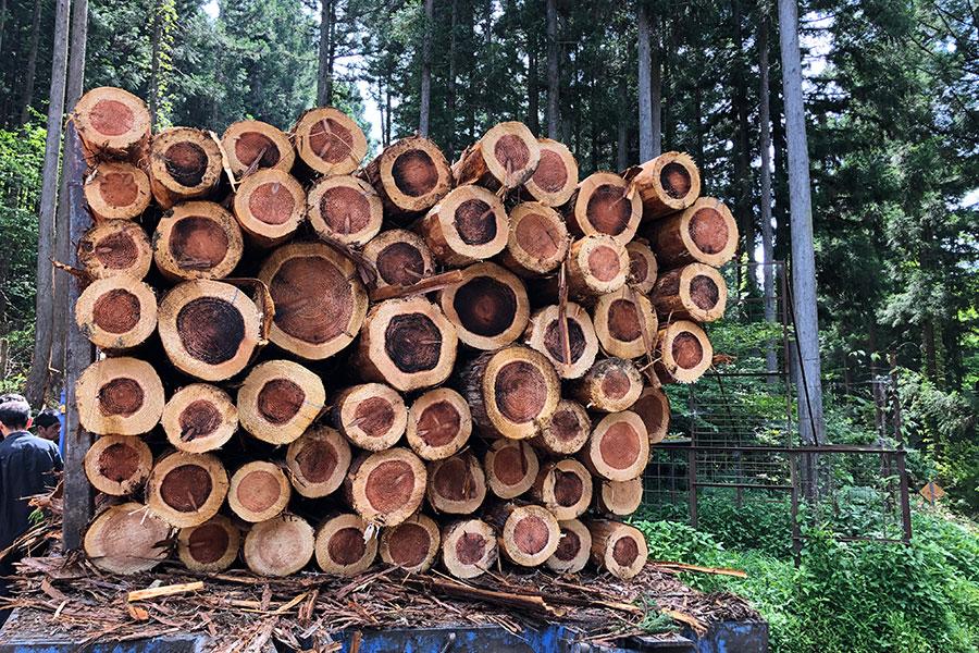 木箱には、岐阜県・長良川流域の山で伐採された「長良杉」を使用