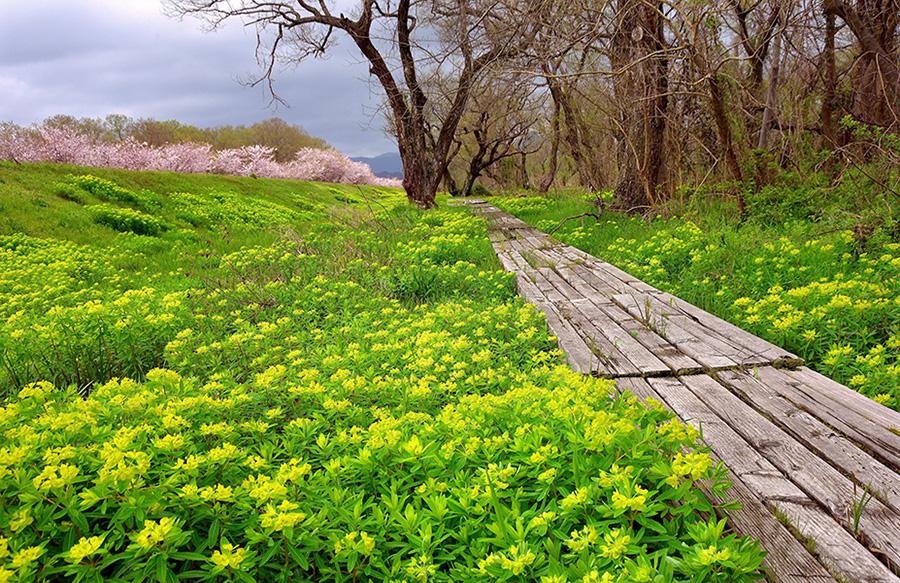 琵琶湖湖畔で楽しめるノウルシ