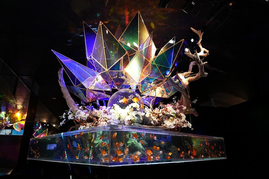 直径150cmの特大水盆水槽とアクリル製作した世界初のダイヤモンド水槽「ジャパニーズアクアリウムディスコ」