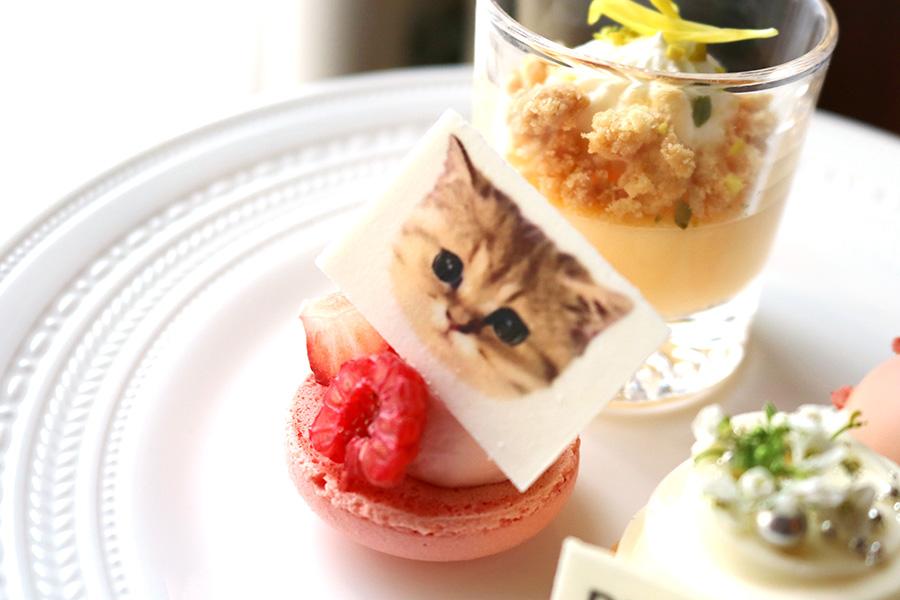 ブランドアイコンでもある、ソフィーの愛猫「Nounette(ヌネット)」のイラスト入りマカロン