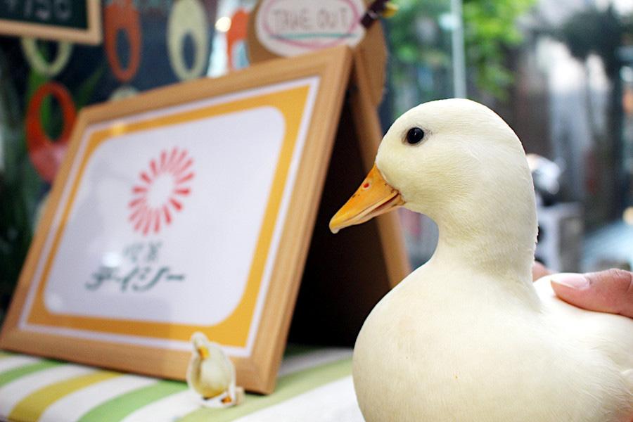 奈良では有名なコールダックのKちゃんも常連