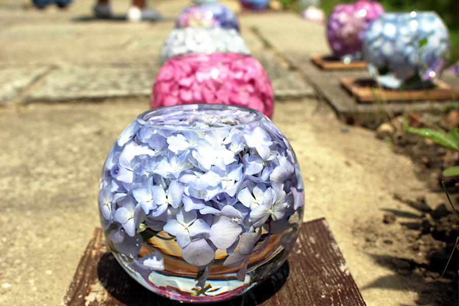 ガラスボールのアジサイで参拝者急増、SNSで注目を集める奈良の寺