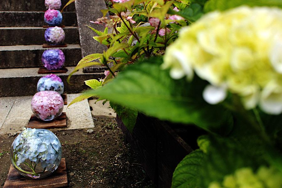 珠のように連なって置かれたアジサイのガラスボールの花手水。まるで、ビー玉やトンボ玉のように輝く