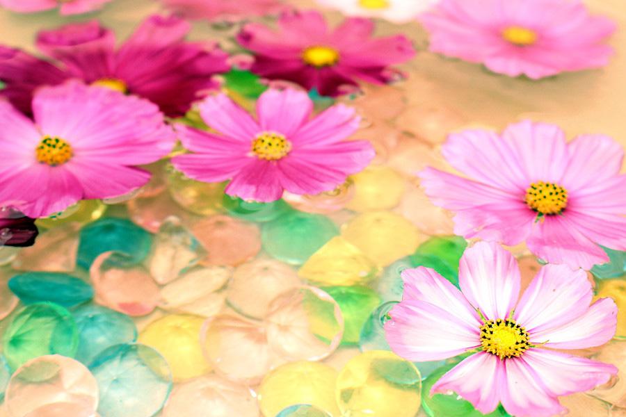 コスモスが美しい花手水