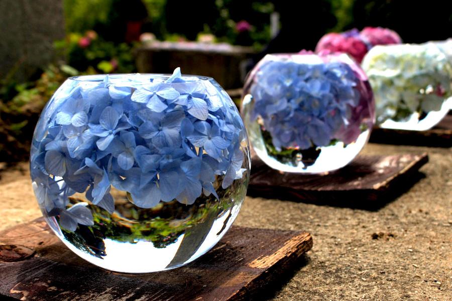 アジサイは午前中がキレイとのこと。水を入れ替えたばかりで陽の光でガラスボールが煌めく様子を撮影する人が多い