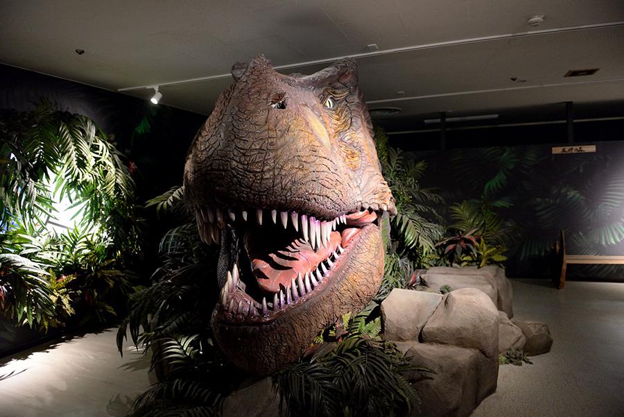 実物大のティラノサウルスの頭部。迫力大