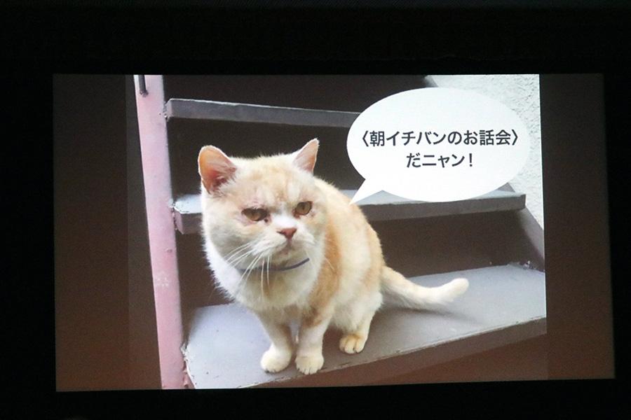 開演前のスクリーンには、猫好きの松本大樹監督が作った画像が映し出されていた