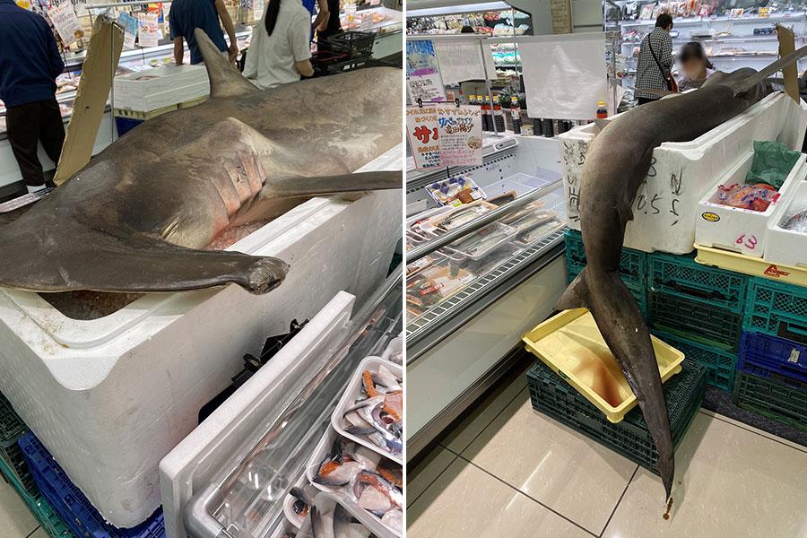 鮮魚コーナーにサメ!? 兵庫・三田のスーパーが二度見案件