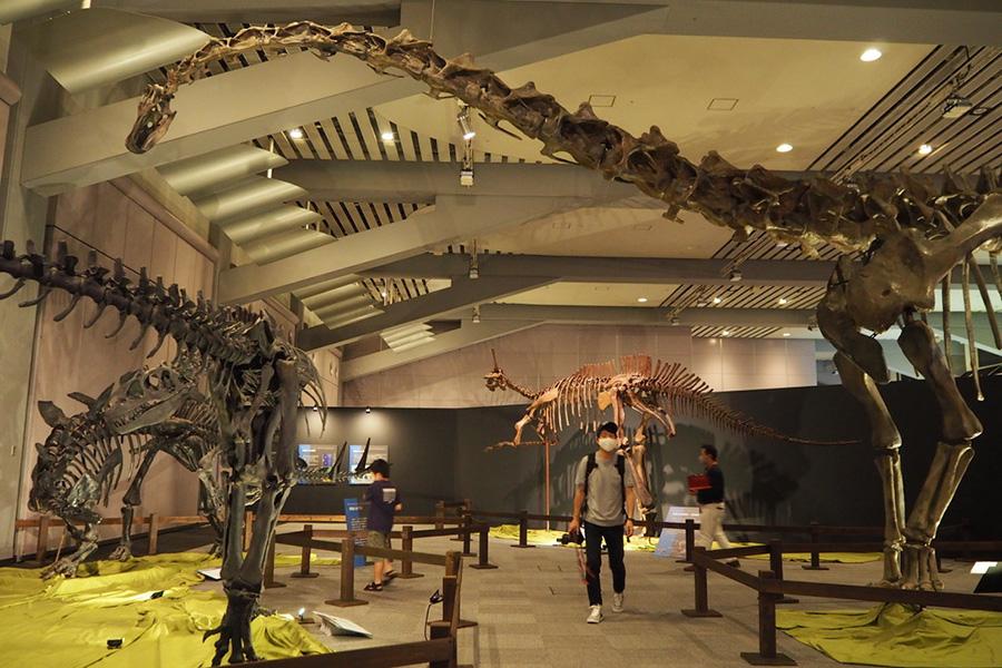 進化の流れを知りながら、当時の恐竜の世界を満喫できる展示内容
