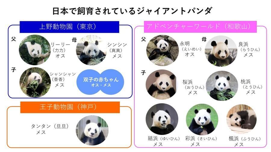 日本で飼育されているパンダは3つの動物園で合計15頭。うち8頭を関西で見ることができる(楓浜:筆者撮影、ほかのパンダ:二木さん提供)
