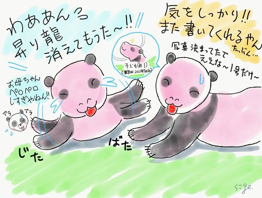 生後13日。お母さんパンダ「シンシン」が赤ちゃんを舐めるため、ついに緑色のマーカーが消えてしまった。「消えてもうた~!」と残念がる1頭。園が近況を発表するたびにストーリーが進むので、見ているほうも楽しい(7月6日掲載、二木さん提供)
