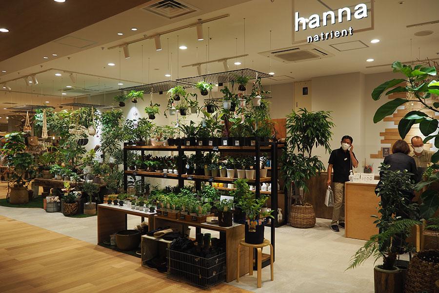 植栽・グリーンの「hanna natrient」