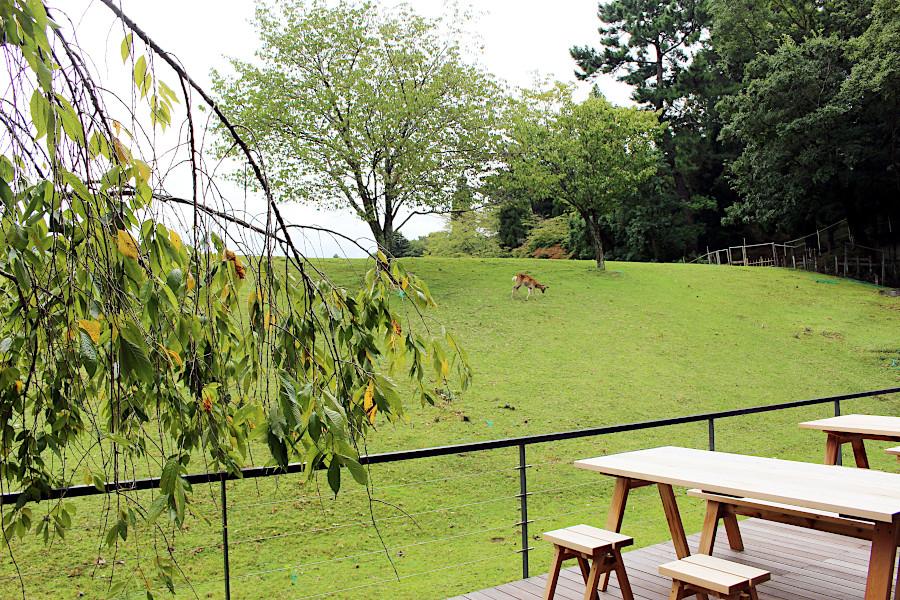 デザイン重視のホテル、奈良に初進出
