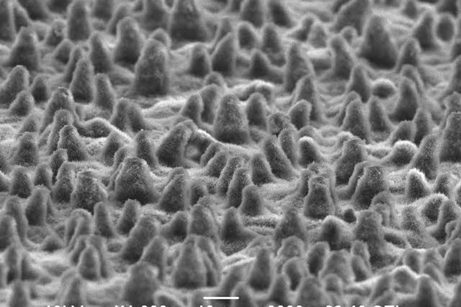 ハスの葉表面を1000倍で見ると、細かい突起物が多数見られる(写真提供:東洋アルミ二ウム)