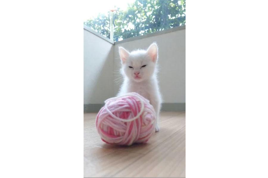 ぽかぽか日差しにウトウト…(動画よりキャプチャ/提供:Ryostory1124 保護猫写真家さん)